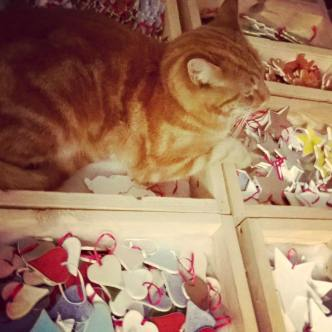 Ginger de kat houdt de wacht over alle kerst decoraties...